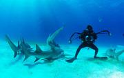 Набирается группа на обучение подводному плаванию на задержке дыхания